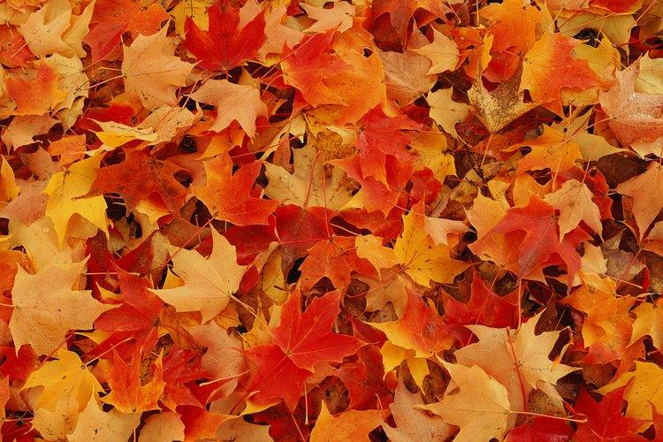 Entérate de cómo secar las hojas rápidamente.