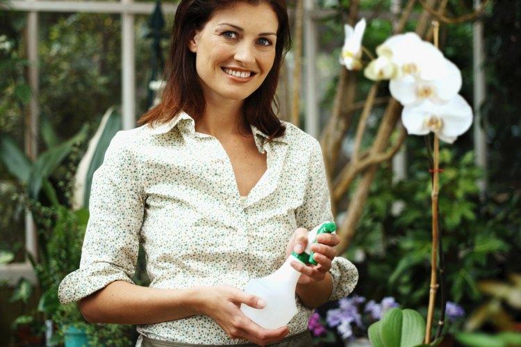 Usa el mejor fertilizante de orquídeas para que tus plantas produzcan flores hermosas.