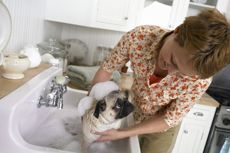 Deja que se sigan alimentando de la madre y ofréceles agua fresca constantemente.