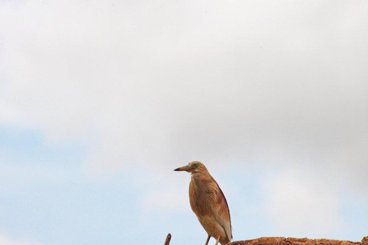 Hay muchos pájaros que frecuentan el parque.