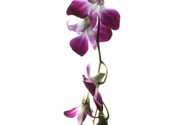Introduce la rama de orquídeas en el patrón y sujétalos con cinta adhesiva.