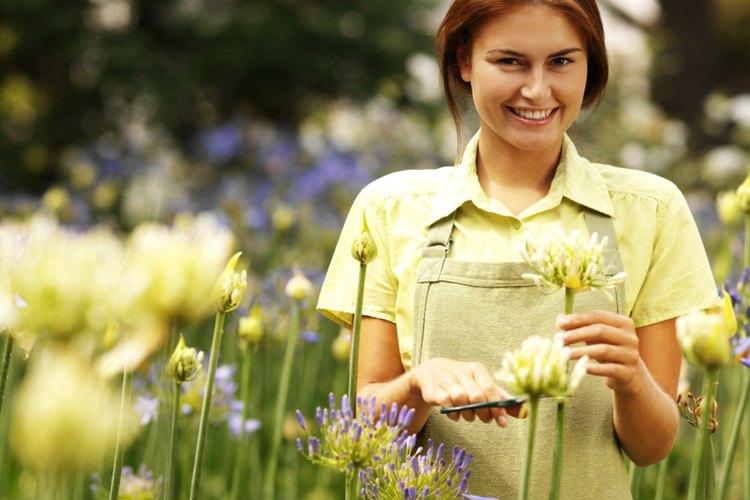 Huele el aire en tu jardín.