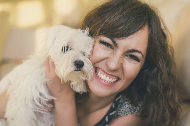 Los perros Malteses necesitan aseo frecuente y recorte de cabello.