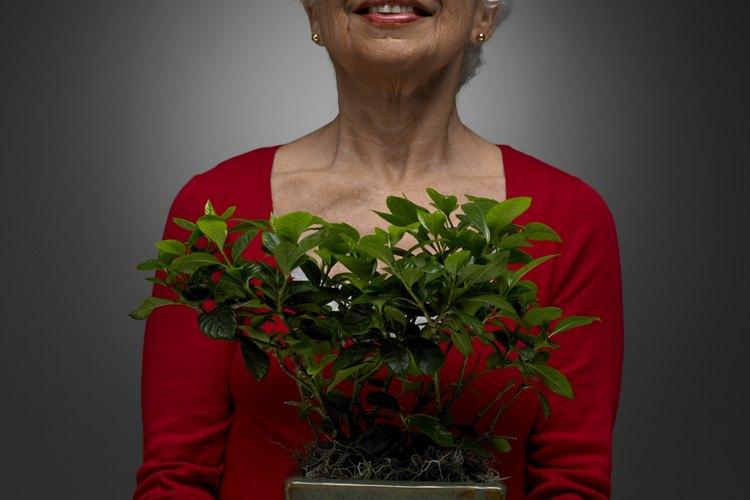 Con el esmerado cuidado, algunas plantas de interior sobreviven a sus propietarios.