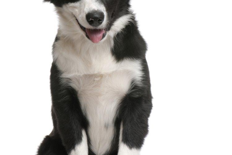 Aprende técnicas para entrenar a tu perro.