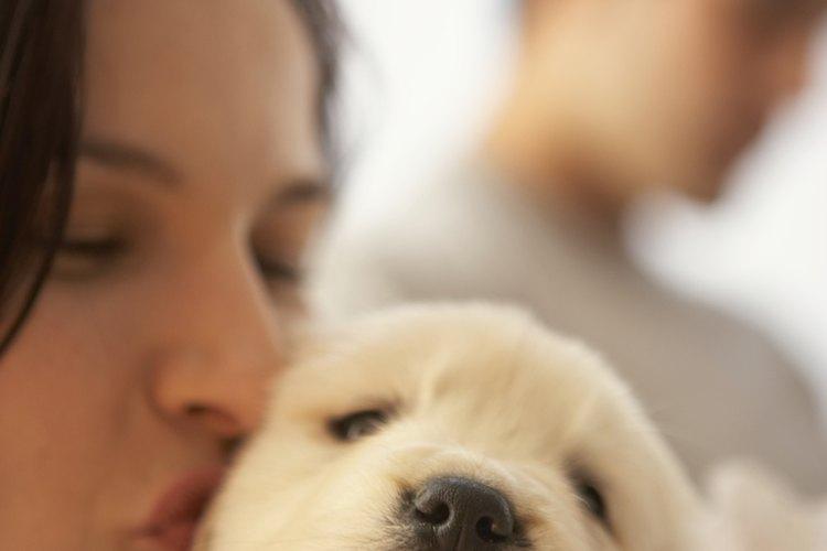 Si el perro está usando un collar, sujétalo del mismo con firmeza.