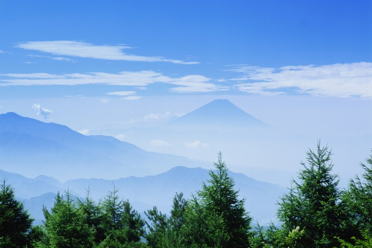 Plantas de hoja perenne frente al Monte Fuji.