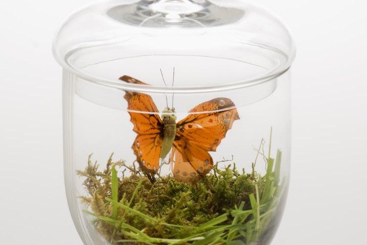 Los jóvenes amantes de insectos disfrutarán de los proyectos de manualidades de temas de insectos.