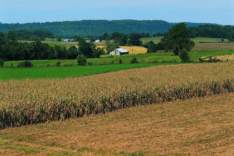 El Rough River Lake en Kentucky, está rodeado de ondulantes campos de cultivo.