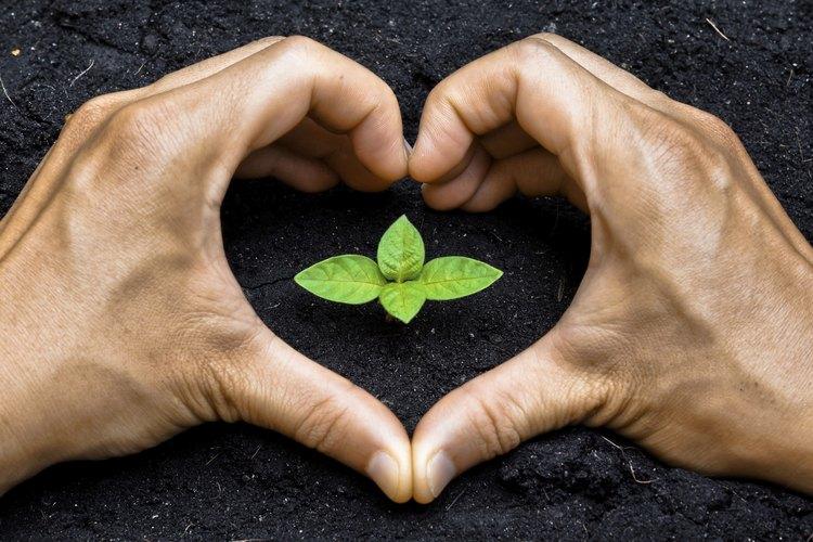 Fertiliza tu árbol anualmente.