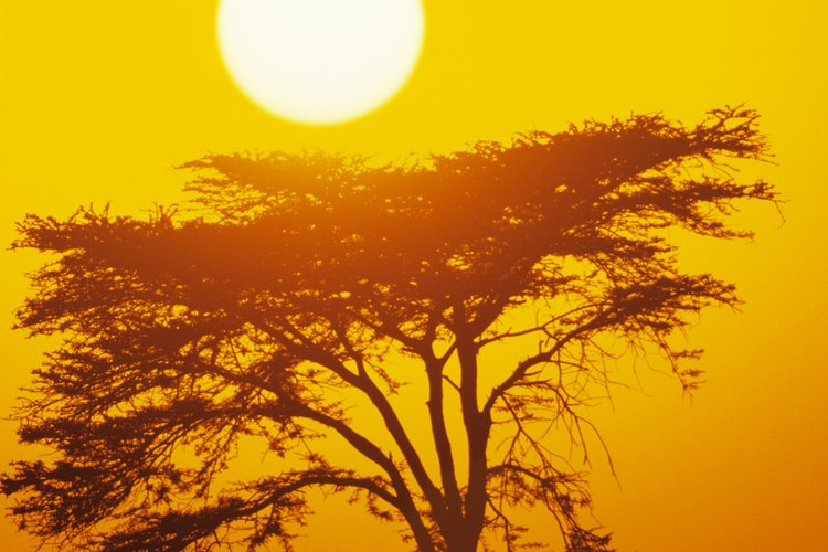 Las costumbres africanas antiguas han sido transmitidas de generación a generación y aún están presentes en las prácticas modernas.