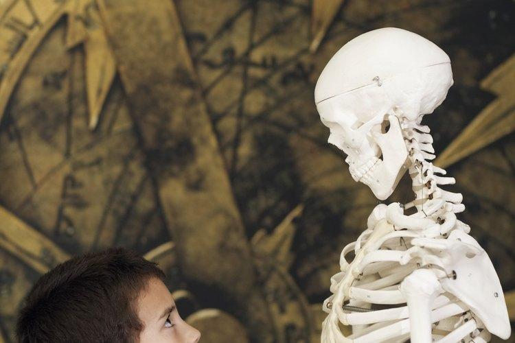 Los museos complementan el aprendizaje infantil.