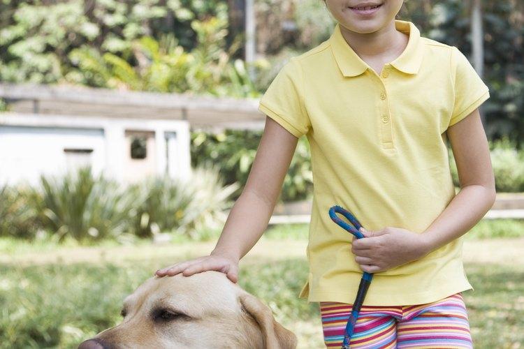 Los perros lactantes necesitan seguir una buena nutrición.