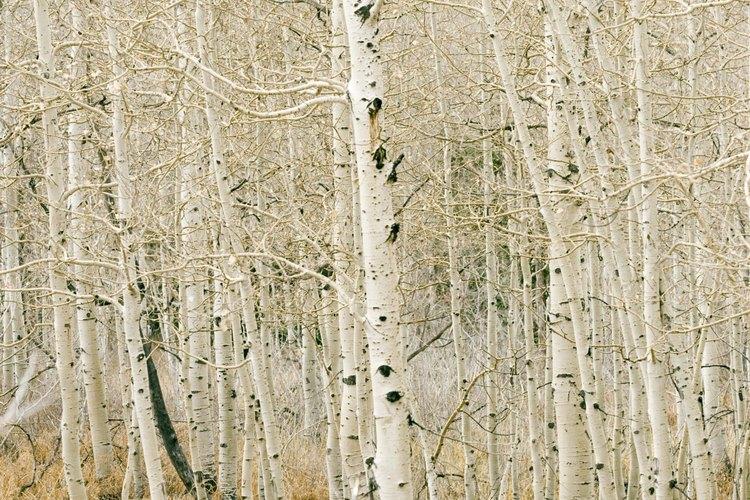 Con las herramientas adecuadas, la tala de árboles es menos peligrosa.