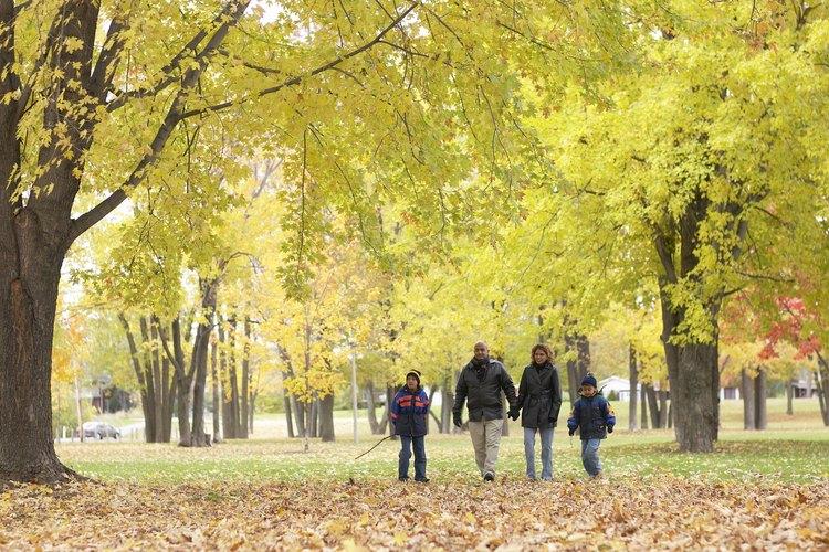 Davis está llena de zonas boscosas y parques.