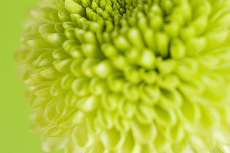 Las plantas tienen nombres científicos además de los nombres comunes.