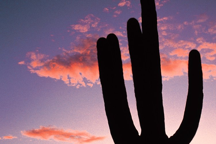 Parque Nacional Saguaro, Arizona.