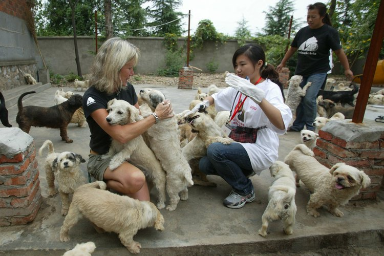 Voluntarios para atender a animales refugiados.