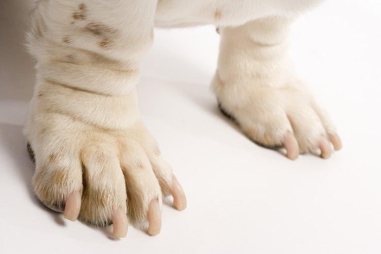 Qué hacer para frenar una hemorragia en la uña de tu perro.