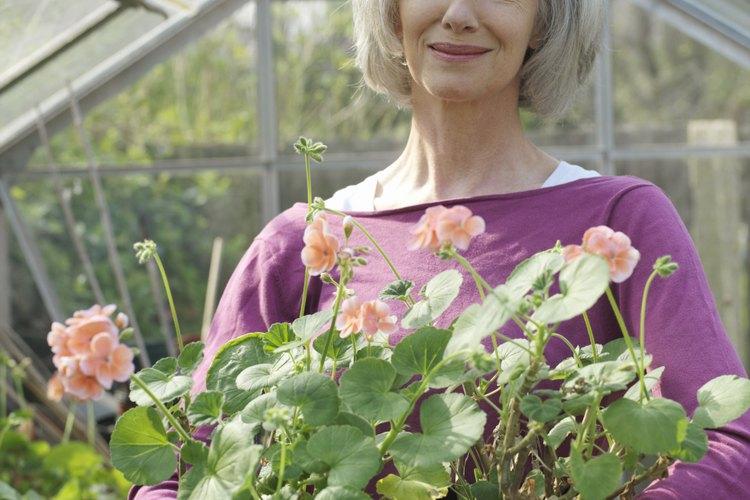El material para techos de patios de policarbonato se usa con frecuencia en invernaderos o áreas de patio con abundantes plantas.