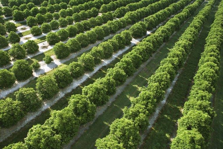 La agricultura sedentaria tiene una tradición orgullosa pero a menudo no es lucrativa.