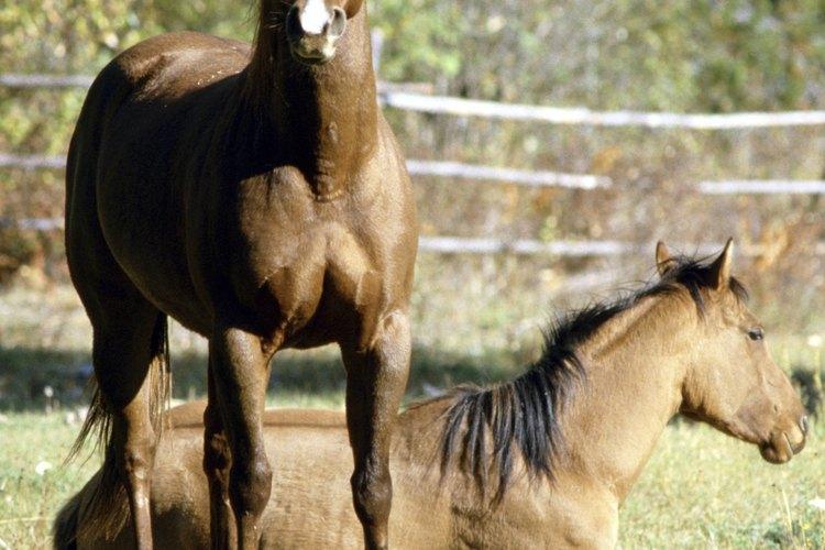 Hay muchas carretas de caballos disponibles.