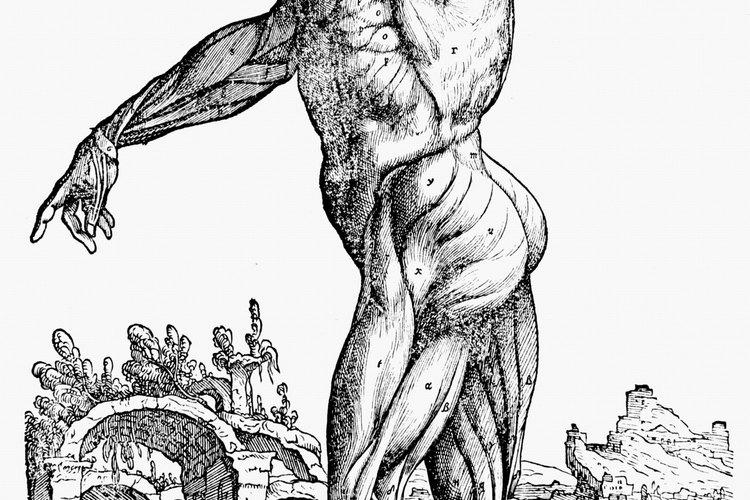 Tejidos en el cuerpo humano.
