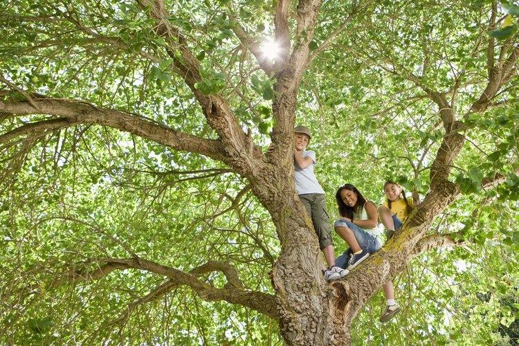 Los daños por insectos en los árboles causan diversos problemas.