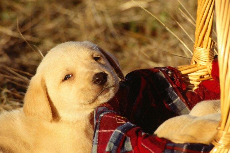 La respiración del cachorro debería hacerse cada vez más lenta hasta que se relaje.
