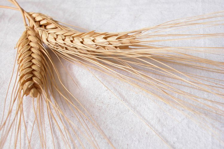 Cultivar trigo involucra un proceso de varios pasos después de la cosecha.