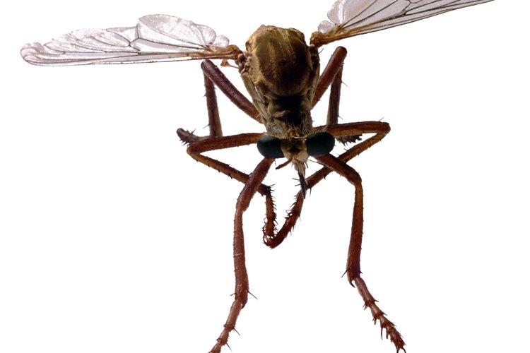 Las moscas pequeñas que pican son molestas y pueden transmitir enfermedades.