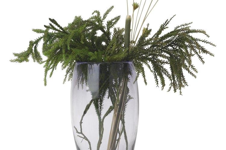 Cultiva la hierba papiro en tu jardín.