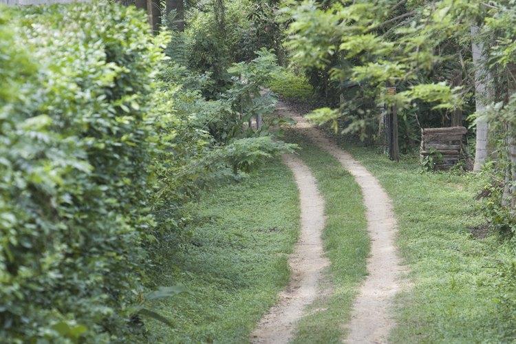 Los árboles y arbustos agregan tamaño a tu paisaje y muchos de ellos hacen una doble función al atraer colibríes.