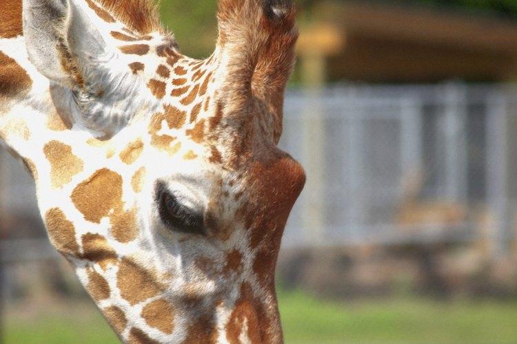 El zoológico del Central Park resultará una buena experiencia para festejar el cumpleaños de los pequeños.