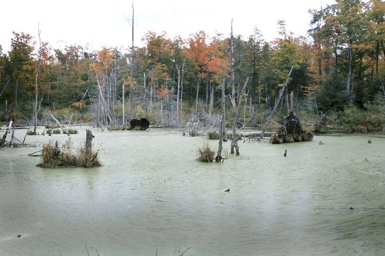 Los ríos, pantanos y lagos pueden ser hogar de las tortugas.