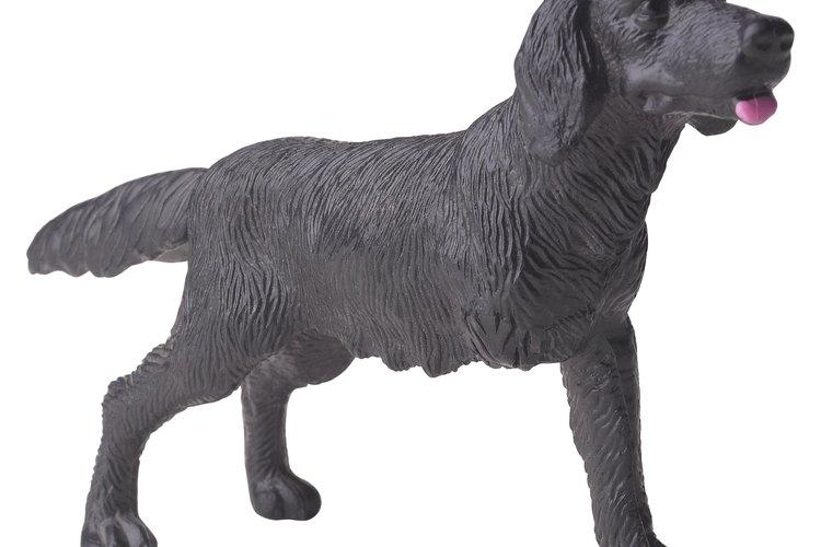 Cuando una pata delantera comienza a paralizarse, el veterinario puede recomendar amputarla.