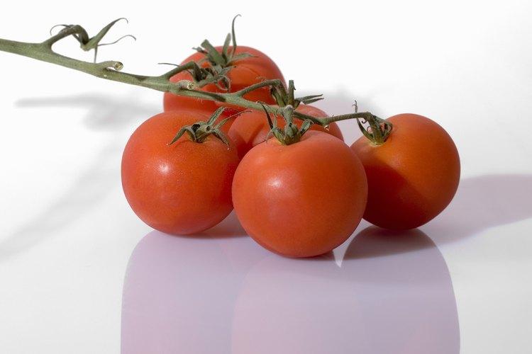 La planta de tomate necesita sol brillante y corrientes de aire para producir su fruto.