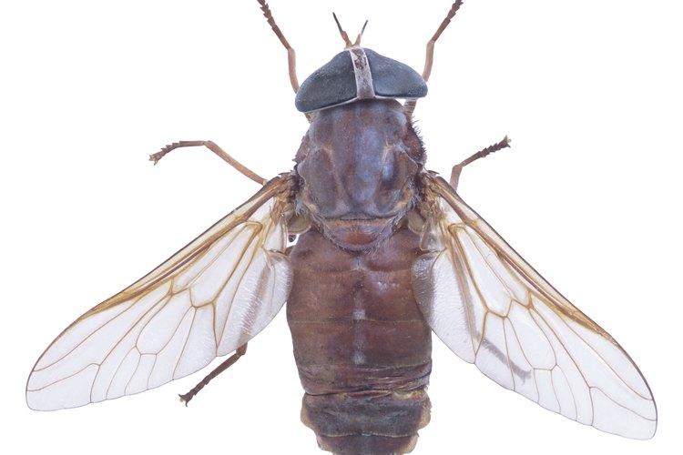 Evita a las moscas usando aerosoles naturales.