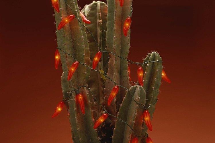Las cactáceas son una familia de plantas suculentas y, en gran mayoría, espinosas, conocidas en conjunto como cactos o cactus.