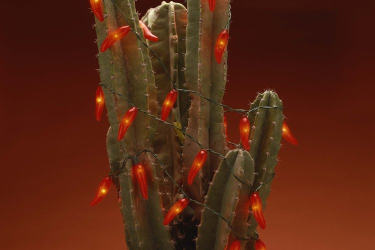 Cactus del hogar.