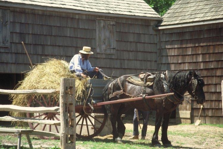 El Condado Todd es casa de la comunidad Amish.