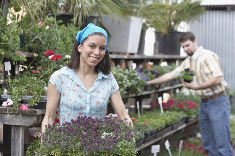 El área de exhibición deberá tener gradas con estantes para exhibir pequeñas plantas con la parte superior de fácil alcance.