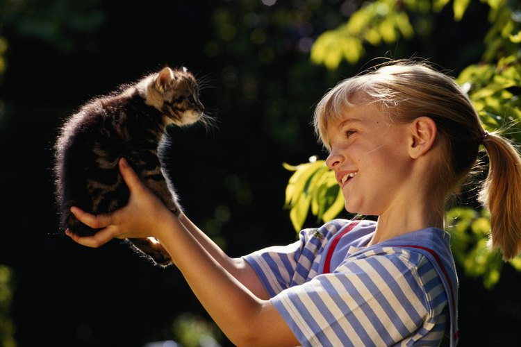 Los gatitos hembras deben convertirse primero en reinas.