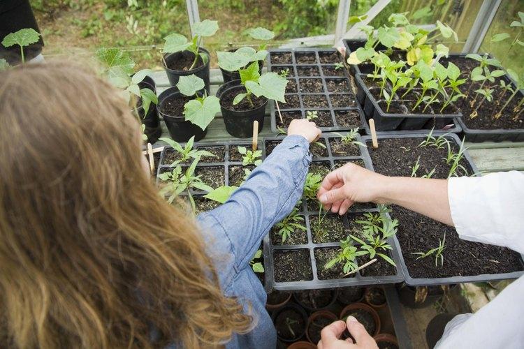 Cultivar plantas es una forma fascinante de que niños pequeños aprendan sobre alimentos.