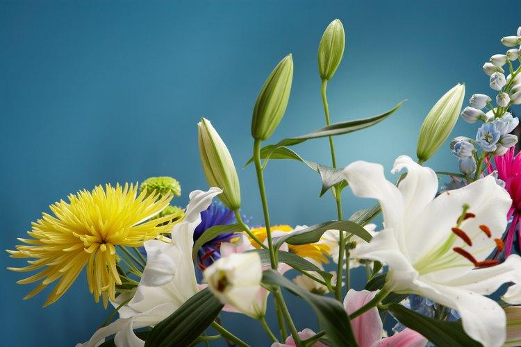 El cuidado adecuado convierte a los capullos frescos en flores vibrantes.