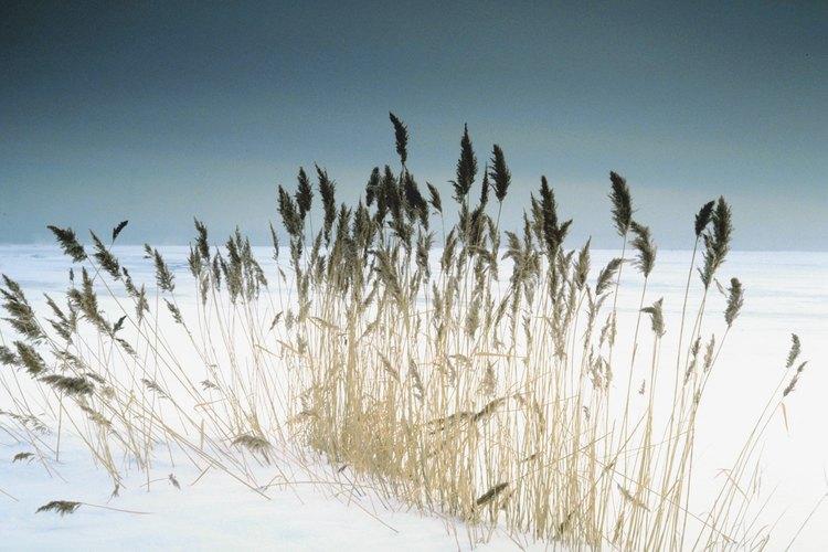 El cereal de germen de trigo es una manera saludable de empezar el día.