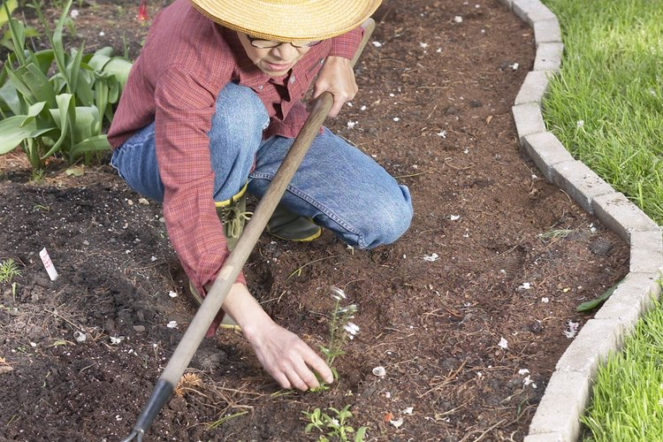 Los jardines se pueden ver invadidos por malezas.