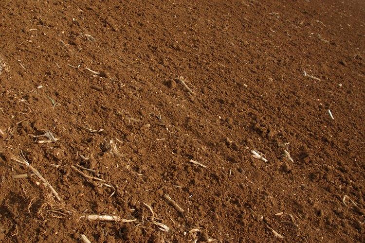 Los hongos blancos que crecen en la tierra  son un tipo inofensivo de moho blanco.