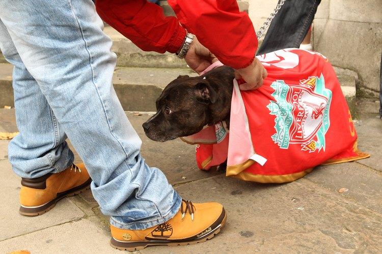 Rescate de animales indefensos.