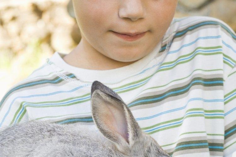 Encuentra un conejo mascota adecuado para tu niño al aprender sobre las características de varias razas.